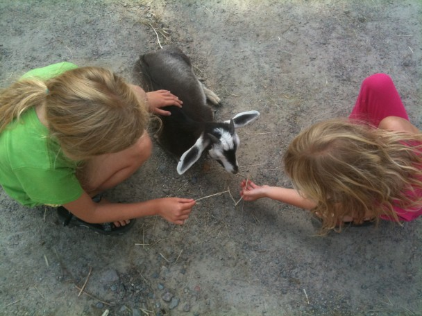 Streichelzoo - Kinder und Tiere
