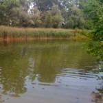 Mühlwasser