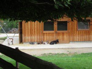 Spielplatz im Pötzleinsdorfer Schloßpark mit Streichelzoo