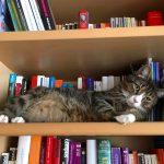 Leseförderung durch Viellesen oder gemeinsames Lesen