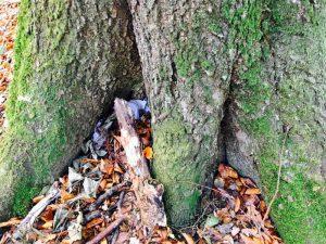 Geocaching - der Fundort am Fuße des Baumes