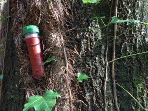 Geocaching - ein neuer Schatz wurde im Baum gefunden