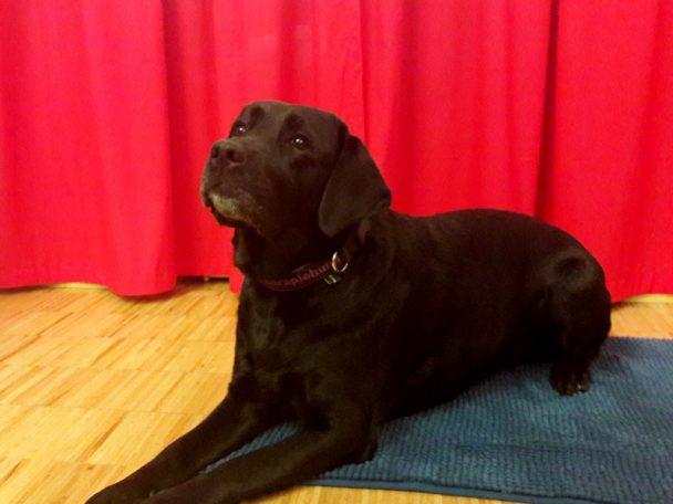 Hundeangstworkshop in der wienXtra-kinderinfo mit Hund Abbey.