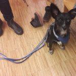 Hundeangstworkshop in der wienXtra-kinderinfo mit Hund Maya.