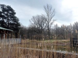 Teich beim Nationalparkhaus Lobau