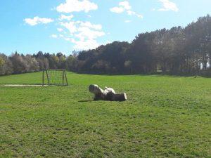 Ausflugstipp Steinhof im blog.kinderinfowien.at