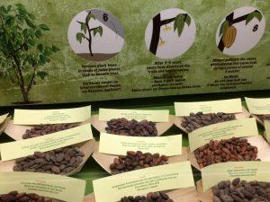 Welche Sorten Kakaobohnen gibt es? Chocolate Museum Vienna