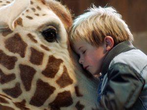 Kinderfilm Mein Freund, die Giraffe